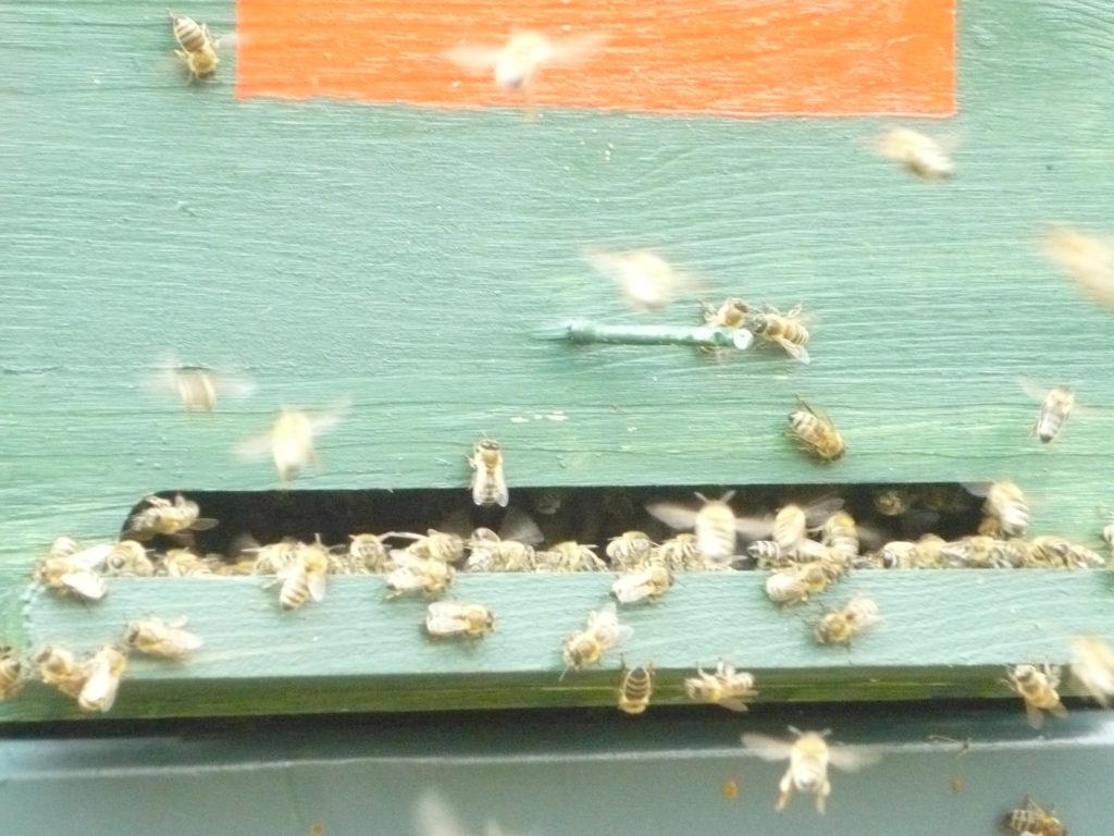 Méheink napozás közben